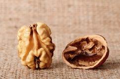 Dried walnut Royalty Free Stock Photo
