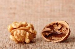 Dried walnut Stock Photos
