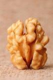 Dried walnut Stock Image