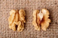 Dried walnut Royalty Free Stock Image