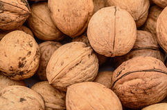 Dried walnuts close up Royalty Free Stock Images