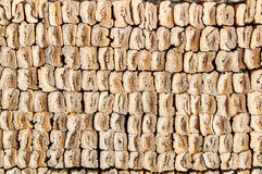 Dried water hyacinth Stock Photos
