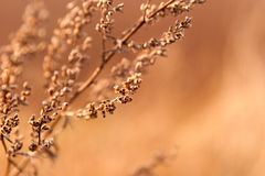 Dried weed in the sunlight Stock Image