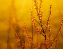 Dried weed in the sunlight Stock Images