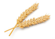 Dried Wheat Ear Stock Photos