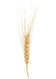 Dried Wheat Ear Royalty Free Stock Photography