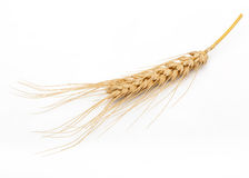 Dried Wheat Ear Stock Image
