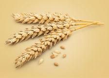 Dried Wheat Ear Royalty Free Stock Images