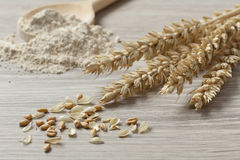 Dried wheat, seeds and flour Stock Photography