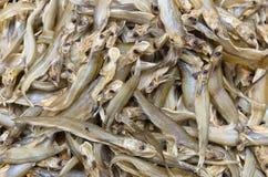 Dried Whisker Sheatfish. Use as background royalty free stock image