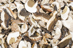 Dried white fungus Stock Photos