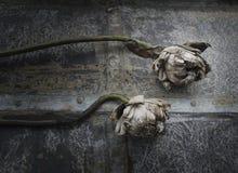 Dried white lotus Royalty Free Stock Image