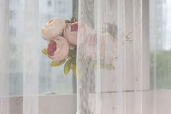 Dried white and pink flower Stock Image