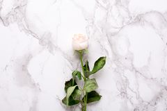 Dried white rose on marble background top view royalty free stock photography
