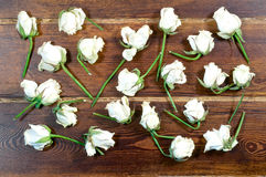 Dried white roses over wooden background Stock Images