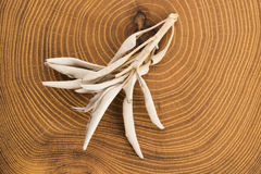 Dried white sage Stock Photography