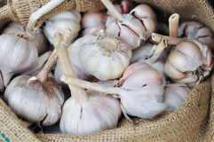 Dried whole garlic in burlap sack in asia Royalty Free Stock Images