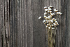 dried wild daisies Royalty Free Stock Photo