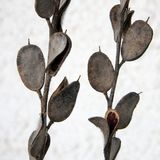Dried Wildflower Seed Pods Stock Photography