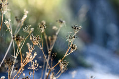 Dried wildflowers in the glade on a sunny summer day. Royalty Free Stock Photos