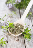 Dried Winter Savory on a cooking spoon Royalty Free Stock Images