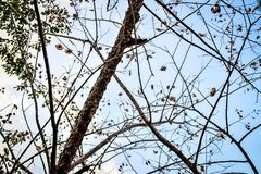 Dried winter tree branches and leaves with blue sky background Royalty Free Stock Photography