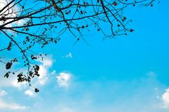 Dried winter tree branches and leaves with blue sky background Stock Photos