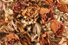 Dried withered roses Stock Photography