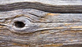 Dried wood background Royalty Free Stock Photo