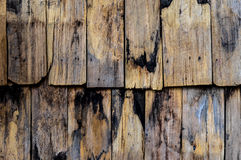 Dried wood texture. A texture of dried wood pattern Stock Photos
