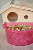 Dried worm for feeding rodent or bird with lizard and wooden house Stock Images