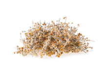 Dried Wormwood Herb Staple.  Royalty Free Stock Images