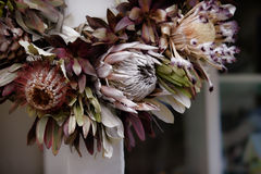 A Dried Wreath of Exotic Hawaiian Protea Flowers Stock Image
