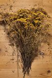 Dried yellow flowers tansy. On a wooden table stock photography