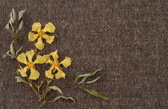 Dried Yellow Flowers on Tweed Fabric with Background space or room for your words Royalty Free Stock Photos