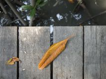 Dried yellow leaf fall on wooden bridge stock photos