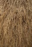 Dried yellow rice straw pattern Royalty Free Stock Photos