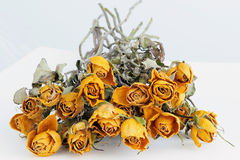 Dried yellow rose Royalty Free Stock Photo