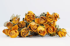 Dried yellow rose Royalty Free Stock Image