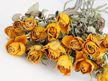Dried yellow rose Stock Photos