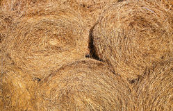Dried yellow round hay as texture. Or background Royalty Free Stock Image