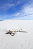 Dried Yucca at White Sands Royalty Free Stock Image