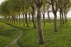 Driehoek van bomen Stock Foto