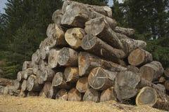 Driehoek van boomboomstammen Stock Afbeeldingen