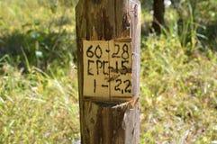 Driemaandelijkse kolom in het hout Stock Foto's