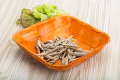 Dries anchovy Stock Images