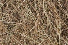 Dries hay. Royalty Free Stock Image