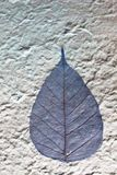 Dries leaves attached on mulberry paper Stock Images