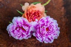 Drievoudige bloemen Royalty-vrije Stock Afbeeldingen