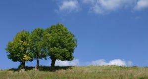 Drievoudige bomen Royalty-vrije Stock Afbeeldingen